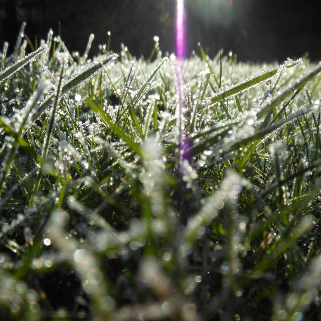 """Dewy grass"" stock image"