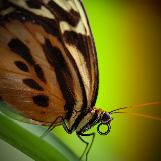 """Resting Butterfly"" stock image"
