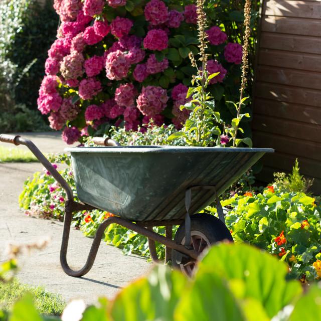 """Early morning garden"" stock image"
