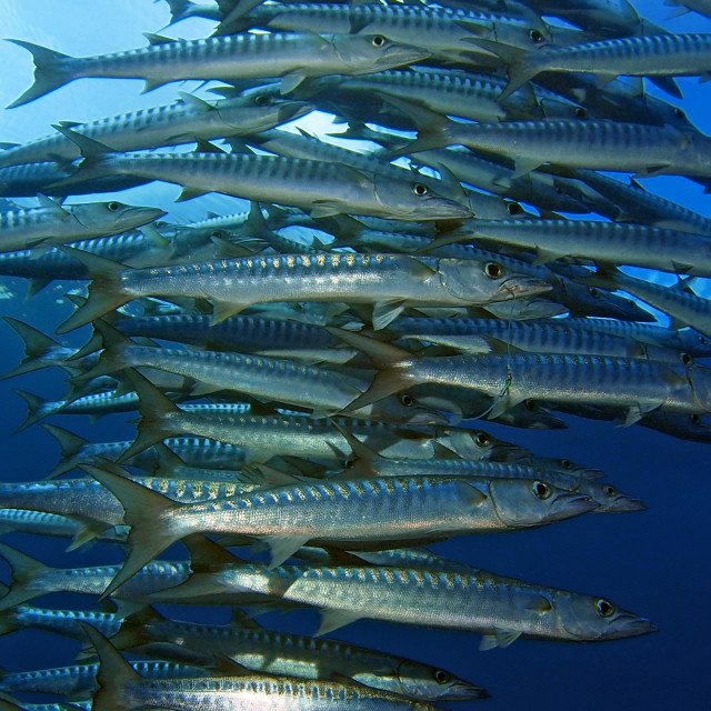 """Barracuda stack"" stock image"