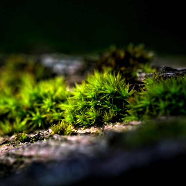 """""""Moss and Lichen"""" stock image"""