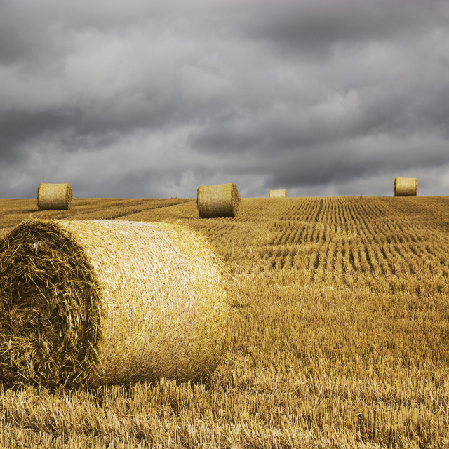 """Hay bales and rain clouds"" stock image"