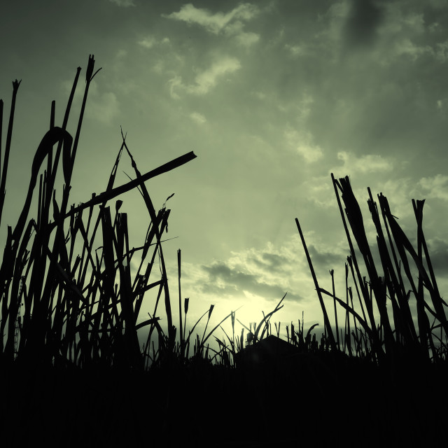 """Dark 1#-Ricefield"" stock image"