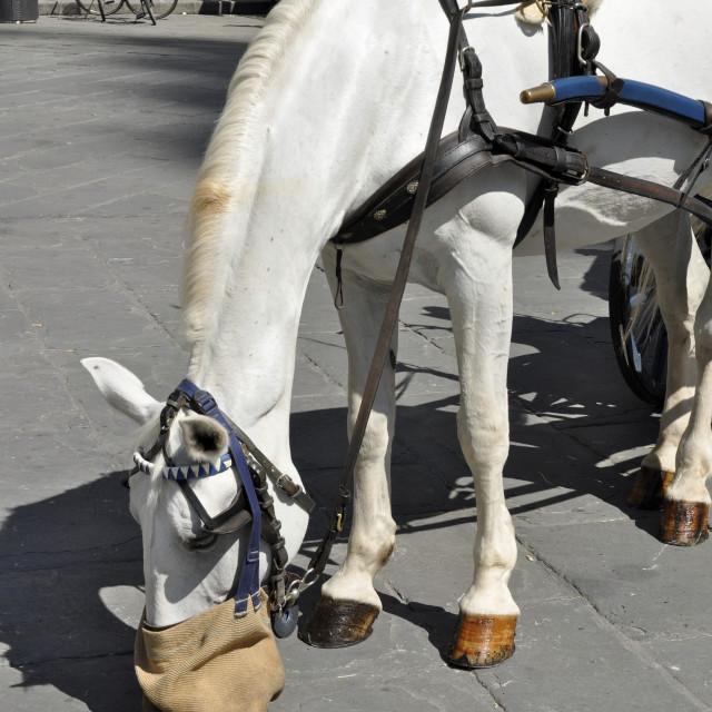 """Equine Lunch Break"" stock image"