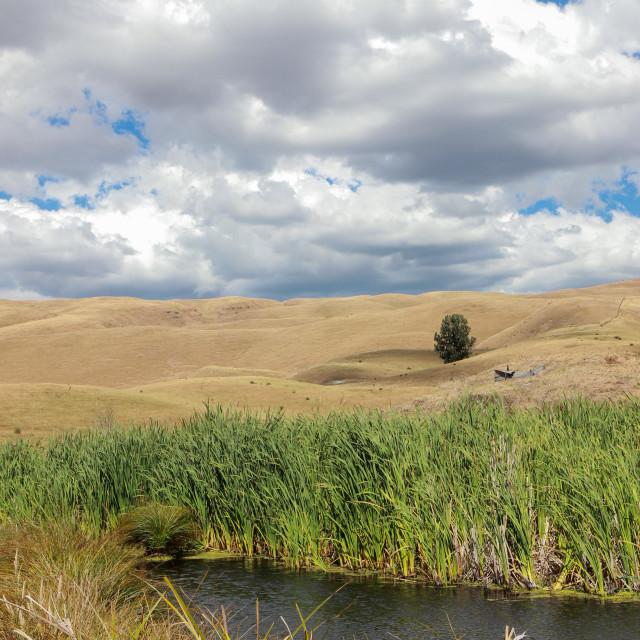"""Wetland reserve"" stock image"