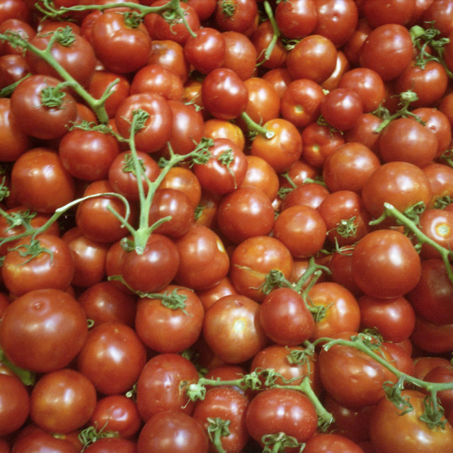 """Sea of Tomatoes"" stock image"
