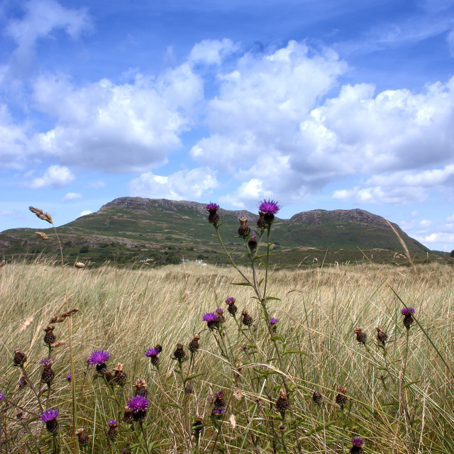 """Black Rock, North Wales"" stock image"
