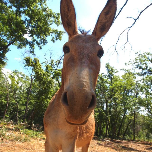 """""""donkey"""" stock image"""
