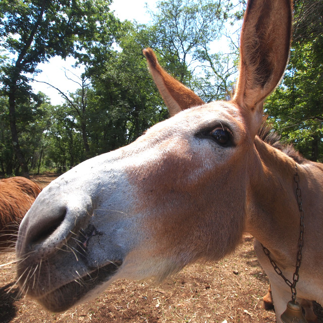 """""""donkey face"""" stock image"""