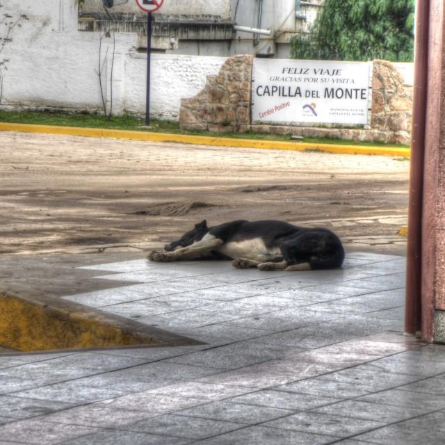 """""""Bus Station Dog"""" stock image"""