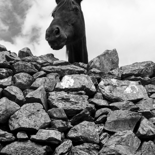 """Wall Horse"" stock image"