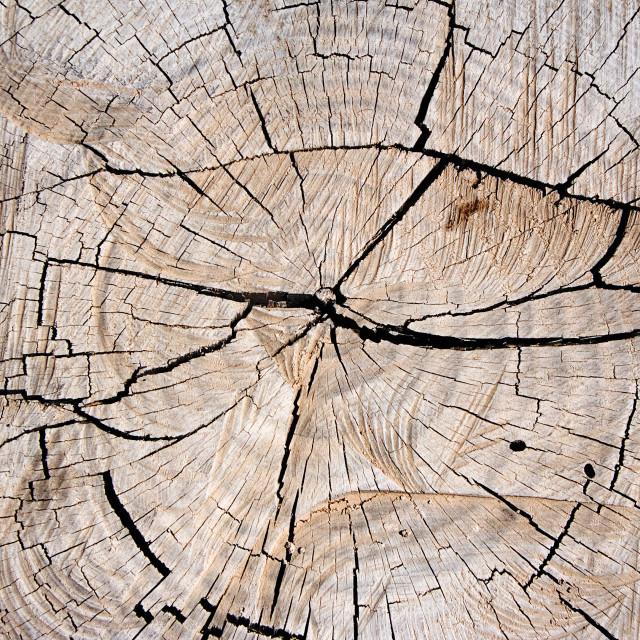 """Tree Stump Texture"" stock image"