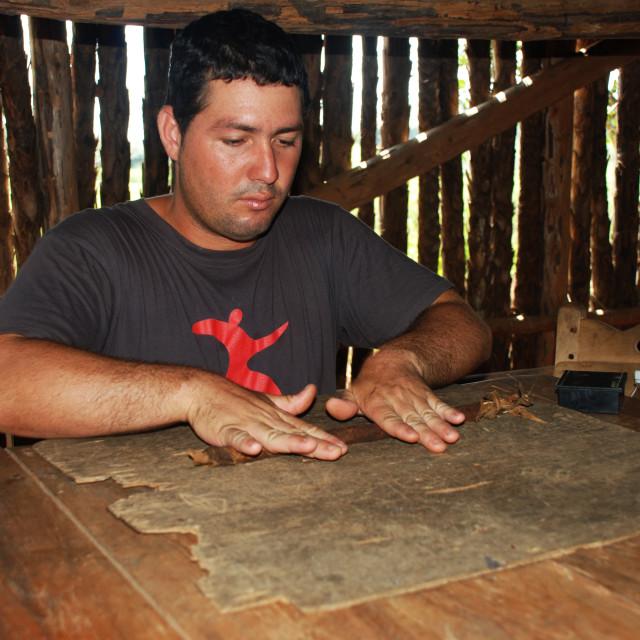 """""""Rolling Cuban Cigar, Viñales"""" stock image"""