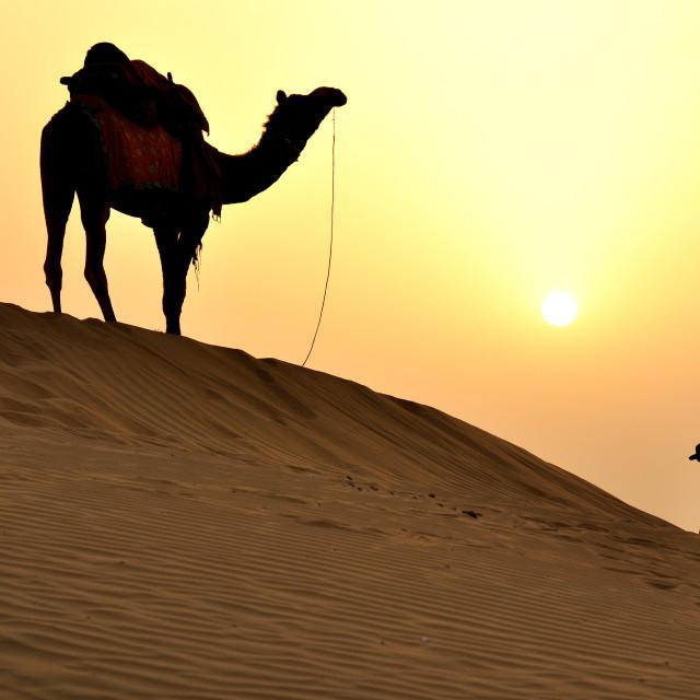 """""""Thar desert view"""" stock image"""