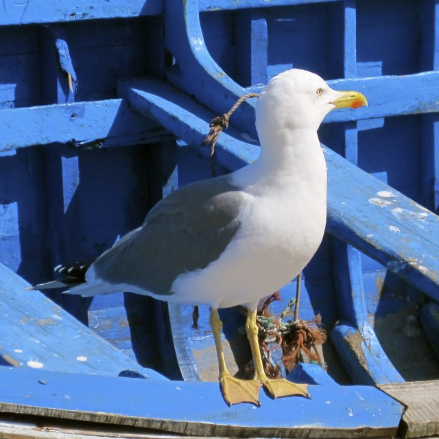"""Seagull on fishing boat"" stock image"