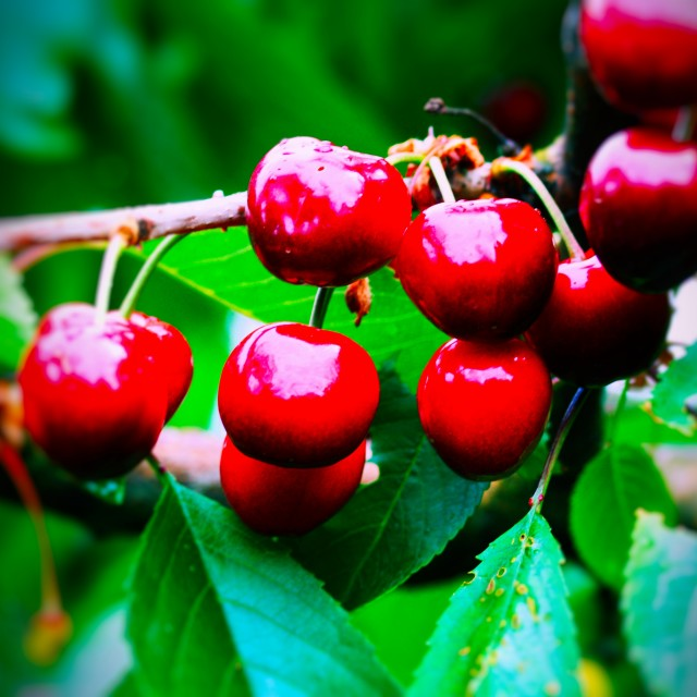 """Cherries #3"" stock image"