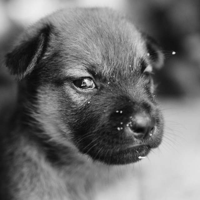 """""""Cute puppy"""" stock image"""