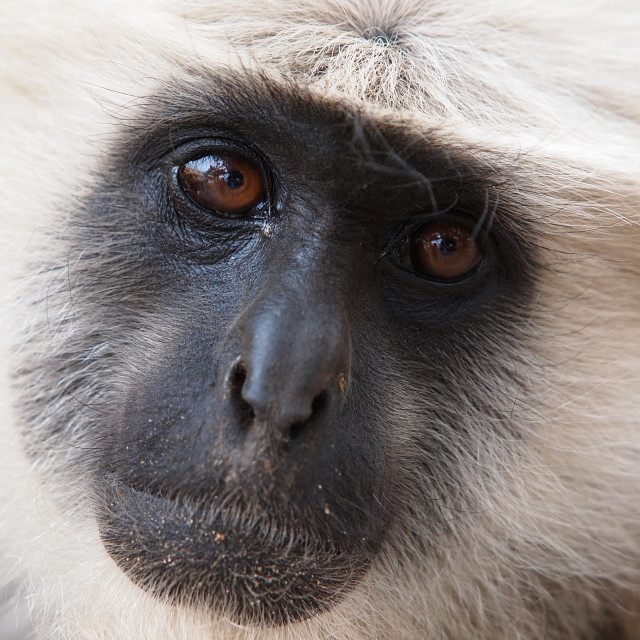 """sead monkey"" stock image"