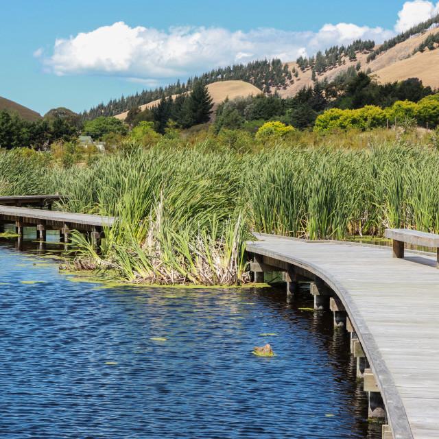 """""""wetland boardwalk"""" stock image"""
