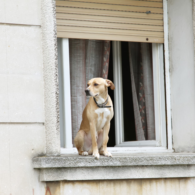 """Window dog"" stock image"