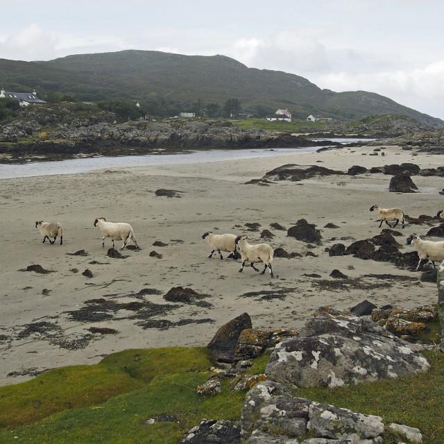"""""""Scottish beach"""" stock image"""