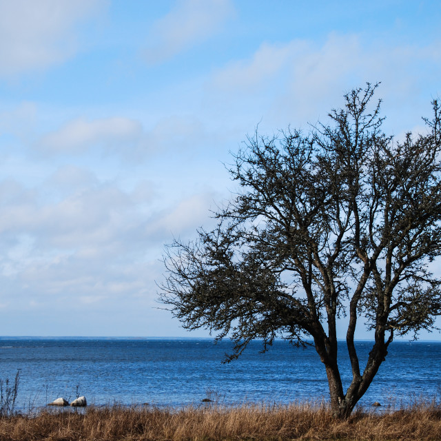 """Single tree at coastline"" stock image"