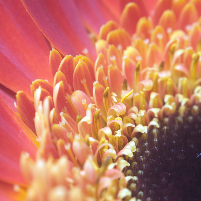 """""""Extreme macro of red yellow flower"""" stock image"""