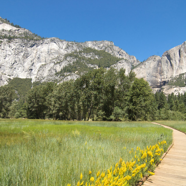 """Horizontal walkway through meadow in Yosemite"" stock image"