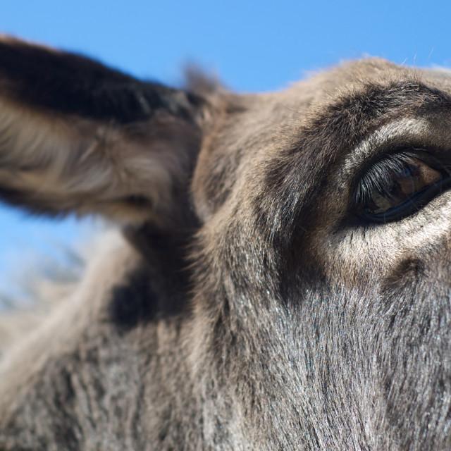 """""""Close up of a donkey's eye"""" stock image"""