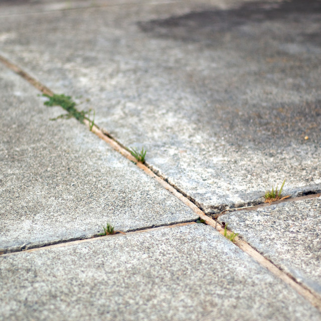 """Intersecting lines in cement on a side walk"" stock image"