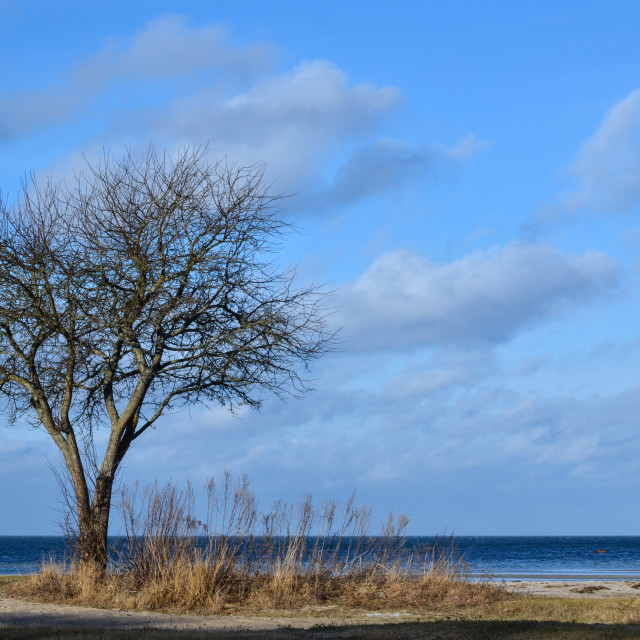 """Bare single tree"" stock image"