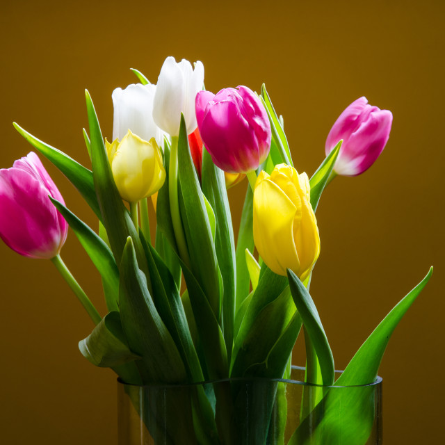 """Tulips bouquet"" stock image"
