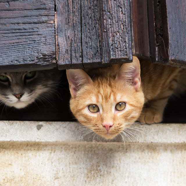 """""""cats on the window"""" stock image"""