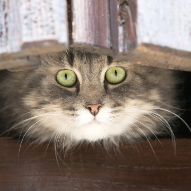 """gray cat"" stock image"