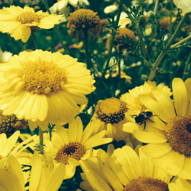 """Bee & Flowers"" stock image"