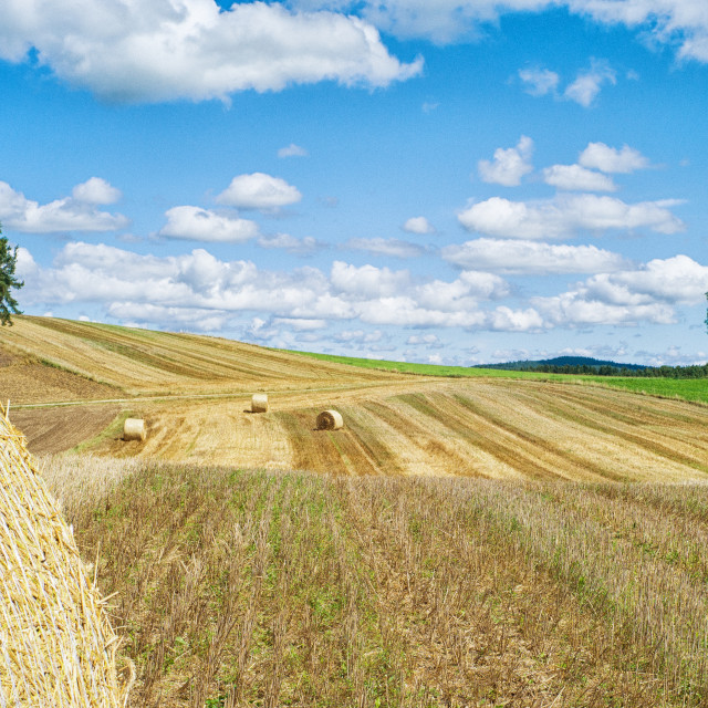 """Bales of straw"" stock image"