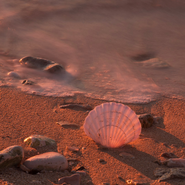 """shell on the beach"" stock image"