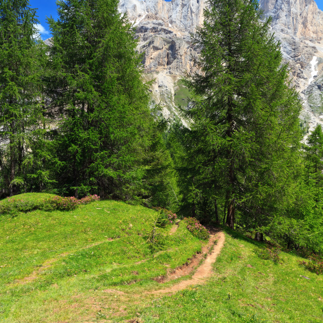 """""""alpine path in Contrin Valley"""" stock image"""