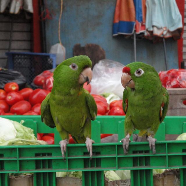 """""""Market gossip"""" stock image"""
