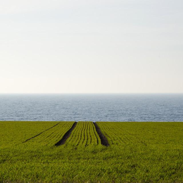 """Green rows at farming field"" stock image"