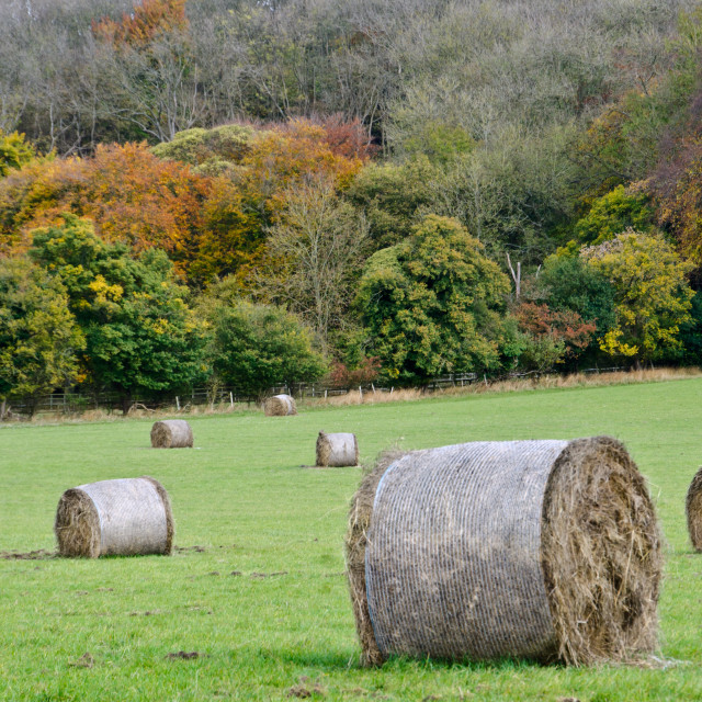 """Autumn hay bales"" stock image"
