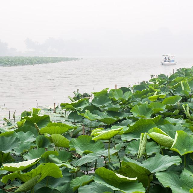 """""""Xuanwu boat trip, Nanjing"""" stock image"""