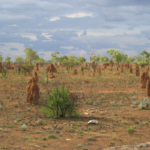 """Australian termite mounds"" stock image"