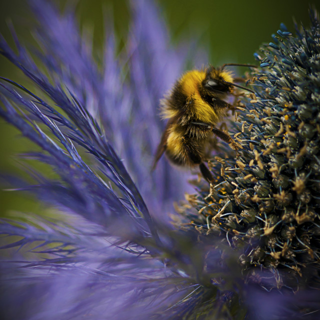 """""""Busy Bee!"""" stock image"""