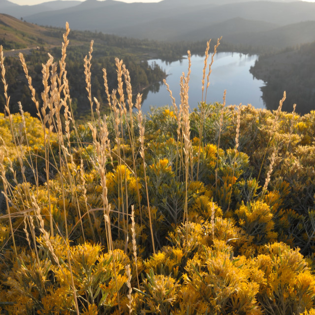 """Sierra Fall Colors"" stock image"