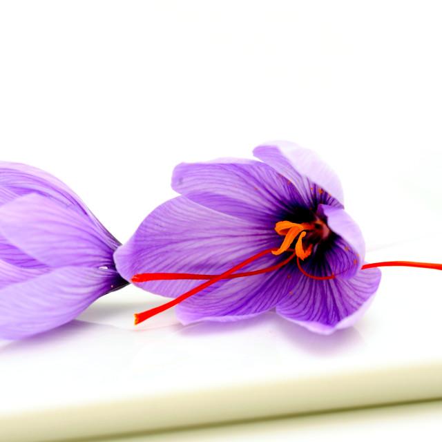 """""""Saffron Flowers"""" stock image"""