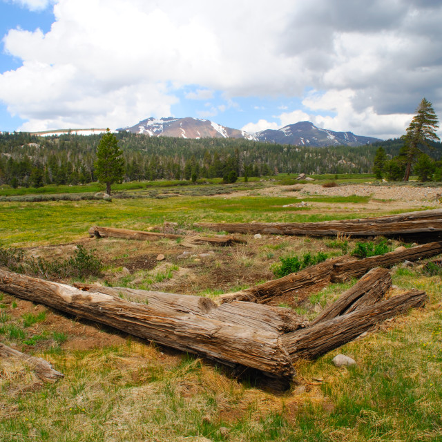 """Log Cabin Remains"" stock image"