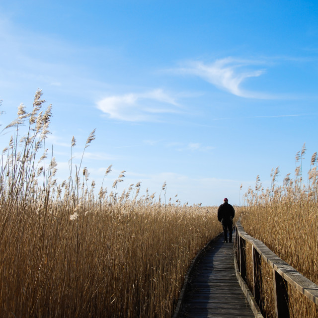 """Walking in the reeds"" stock image"