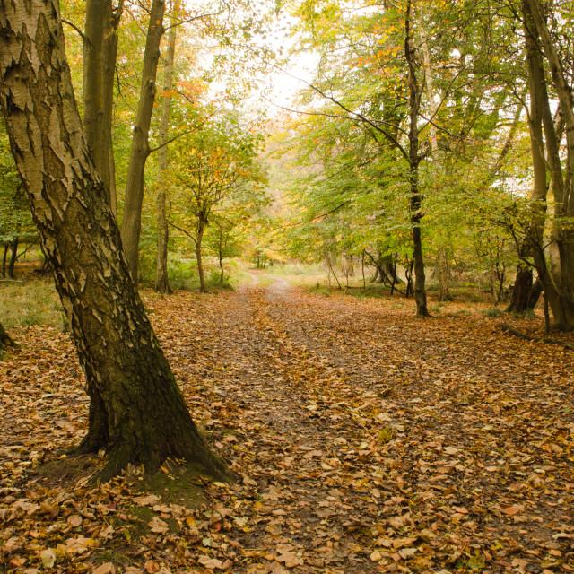 """Autumn scene"" stock image"