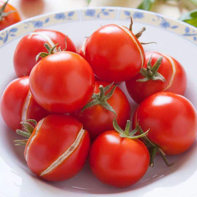 """Tomatoes dish"" stock image"